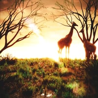 Africa savannah