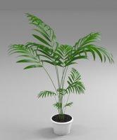 hoveya palm 3D model