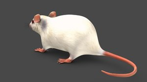 3D rodents mice