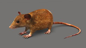 mouse mice small model