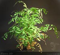 3D plants hd
