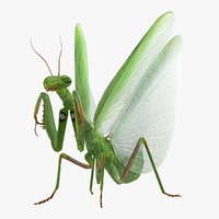 european mantis wings open 3D model