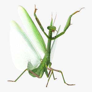 3D praying mantis model