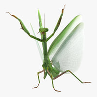 Praying Mantis with Fur 3D Model