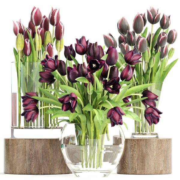 bouquet tulips 3 pieces 3D model