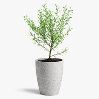 3D tree pot