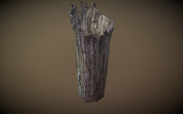 photogrammetry agisoft model