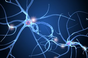 3D nerve cell anatomy brain