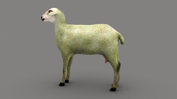 sheep mammal livestock 3D