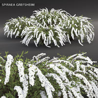 shrub spiraea cinerea 3D model