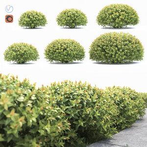 3D bushes spiraea