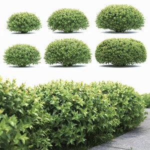 bushes spiraea 3D