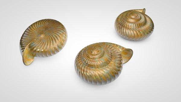 3D snail shell model