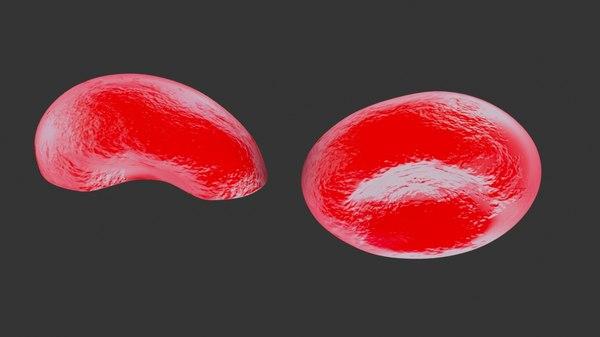 red blood erythrocytes 3D model