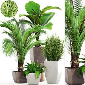 3D palms plants