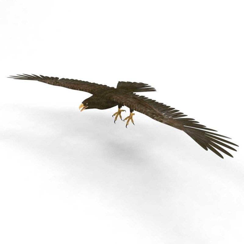 eagle hawk 3D