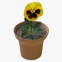 3D pansy flower