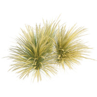 3D model mexican feather grass