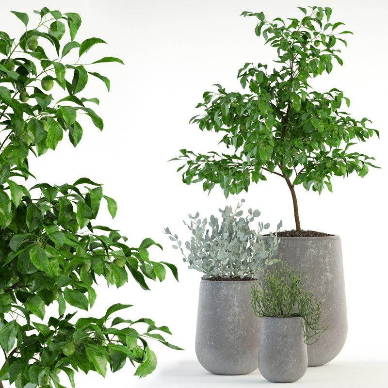 plants 82 garden life model