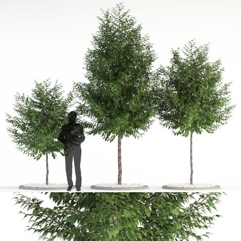 3D plants 83