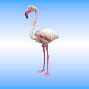 bird flamingo model