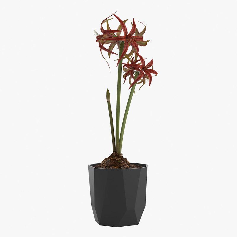 flower amaryllis flowerpot elho 3D model