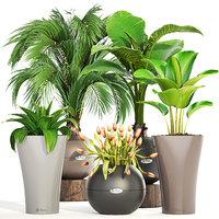 3D model palms plants