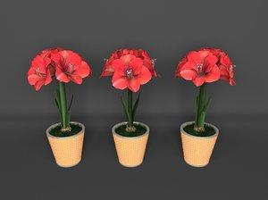 3D red amaryllis