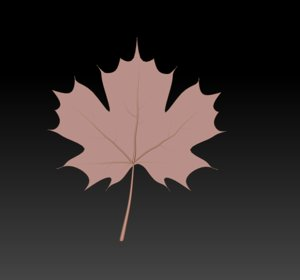 maple leaf 3D