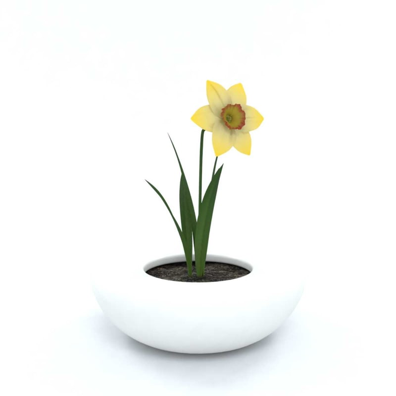 3D narcissus flowers pot model