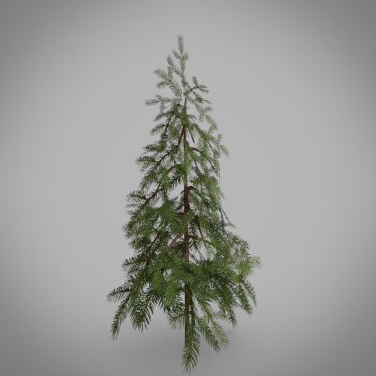 3D tree douglas fir