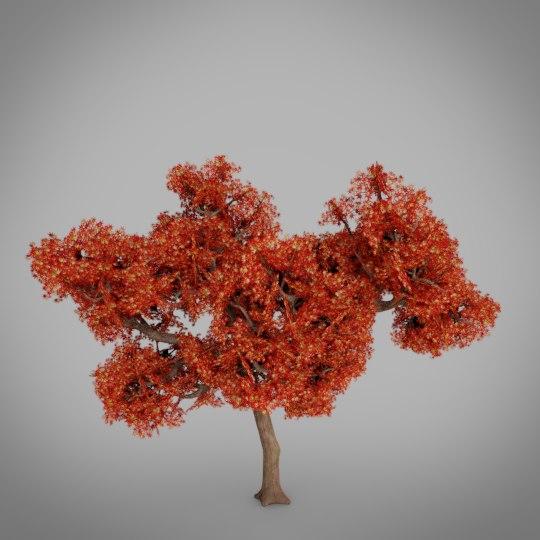 3D tree japanese maple model