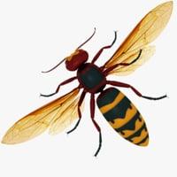 european hornet 3D model