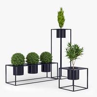 Box plant