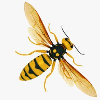 hornet 3D