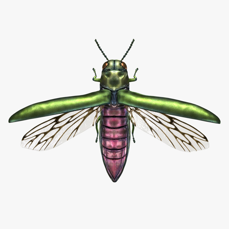 3D model beetle emerald ash borer