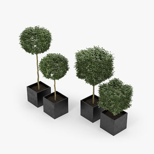 3D plant box