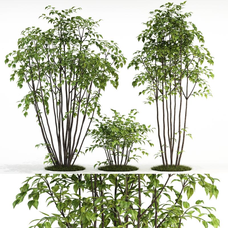 3D plants 84