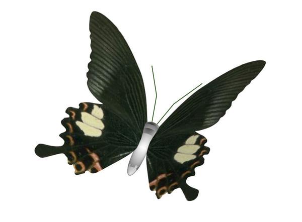 butterfly fly 3D model
