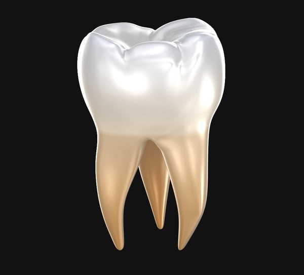 molar teeth human tooth 3D model