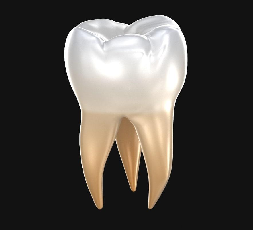 molar teeth human tooth 3D model