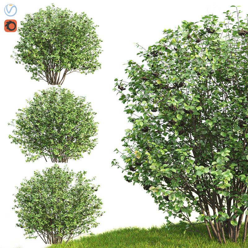 3D aronia bush hedge