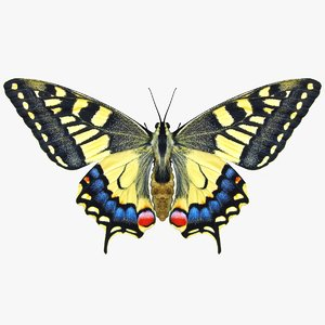 3D realistic butterfly papilio machaon