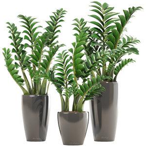 zamioculcas set plants 3D model