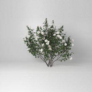 3D model viburnum tinus