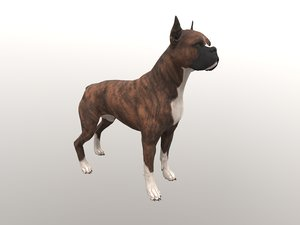 dogs english bulldog 3D