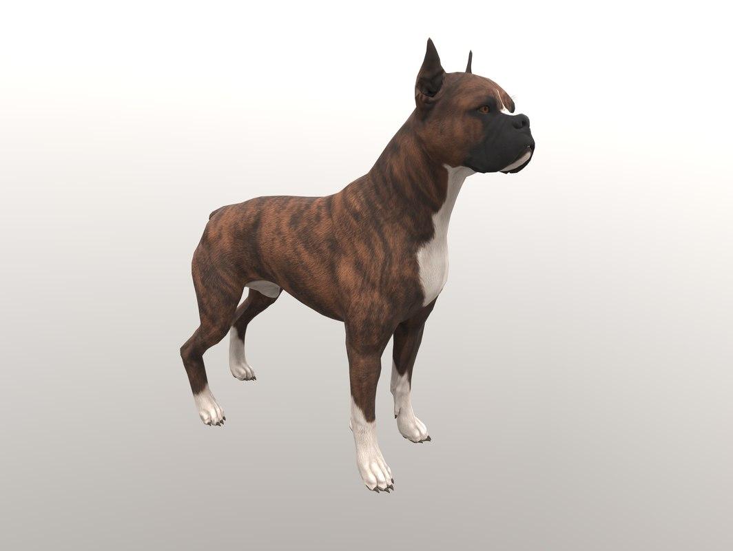 dogs english bulldog 3D