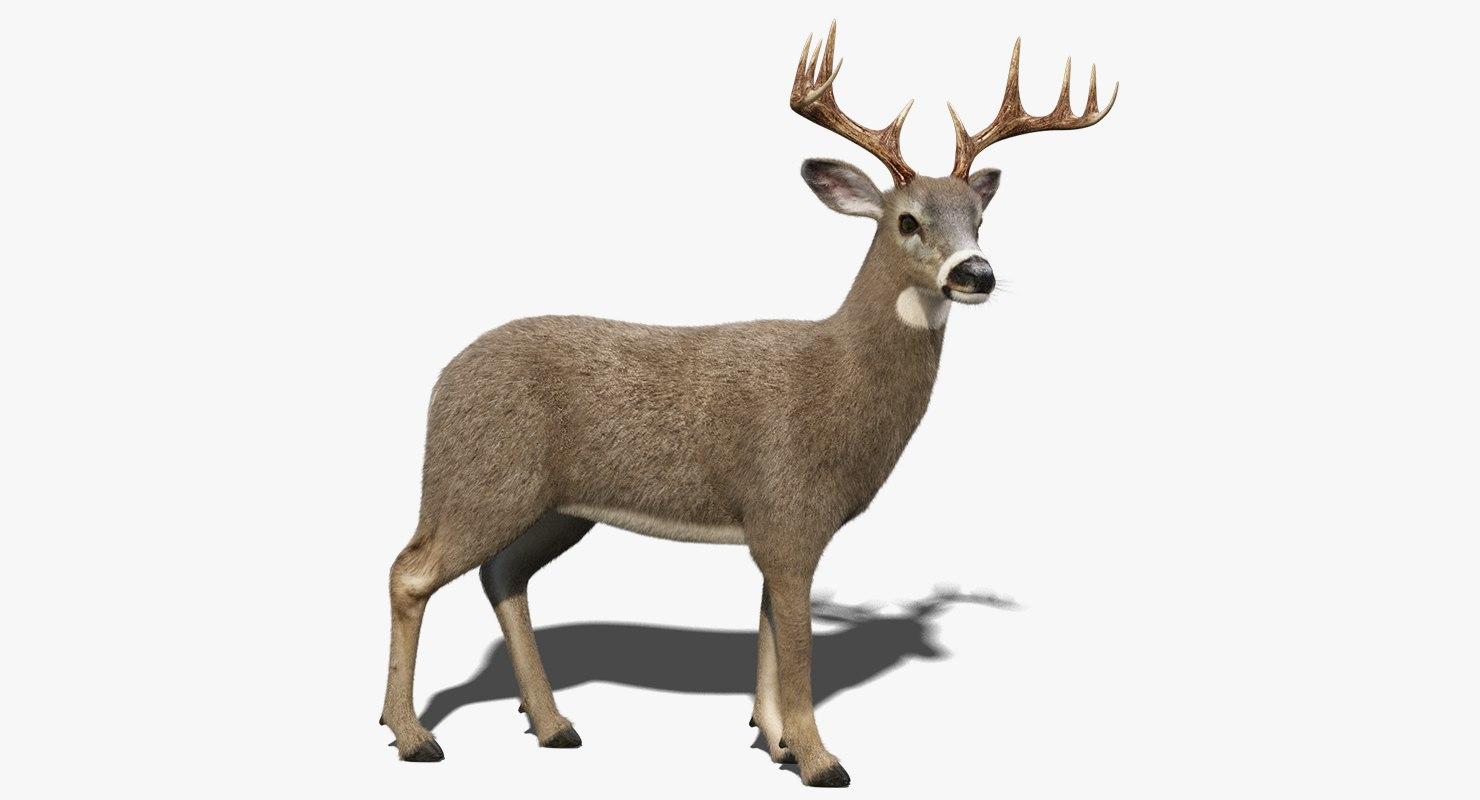 white tailed deer fur 3D model