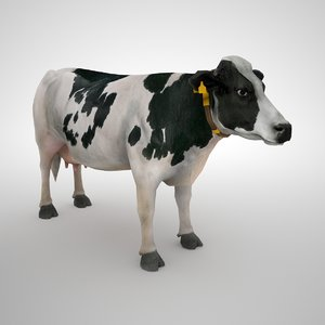 holstein cow model