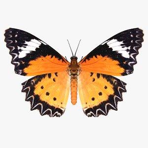 realistic cethosia penthesilea butterfly 3D model